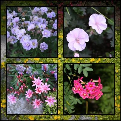 Blomstring 28. juni 1